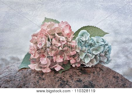 Hydrangea Blossoms On A Stone In The Water, With Texture