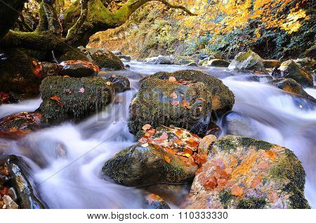 Bright Waterscape Of Fast Rocky River