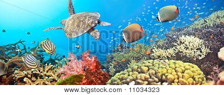 Unterwasser-Panorama