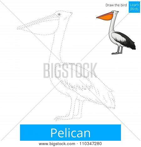 Pelican bird learn birds coloring book vector