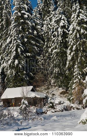 mountain house near pine tree forest, small cabin covered with fresh snow in wild nature at sunny winter day