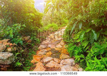 beautiful stone road under sunshine in Nepal, Annapurna trekking