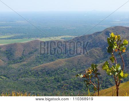 Guimaraes plateu, Brazil.