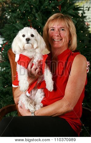 A beautiful blonde woman poses with her beautiful pure white pure breed Bichon - Maltese dog with her Christmas tree behind her. Shot in studio with studio lights. Focus on their faces.