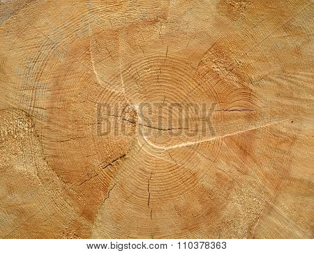 Brown Sawed Wood Log End Natural Background