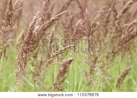 Grass on a meadow