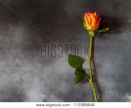 Condolence Card With Yellow Rose