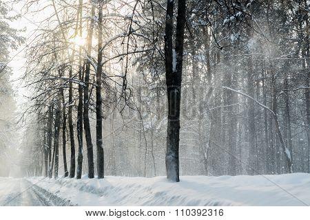 Winter In The Forest With Snow Dust On The Roads In Russia, Siberia