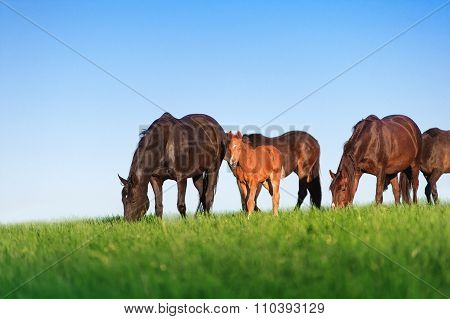Herd of horses on a background of blue sky.