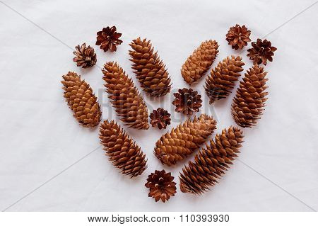 Heart Of Pine Cones And Fir Cones On White Background.