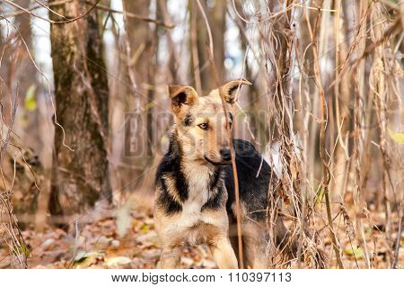 Stray Stray Dog In The Autumn Forest