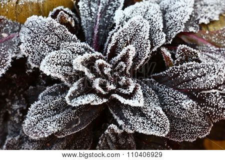 Pattern from hoarfrost on a plant.