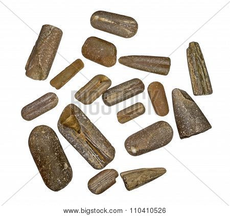 A collection of fossilized belemnite rostrums