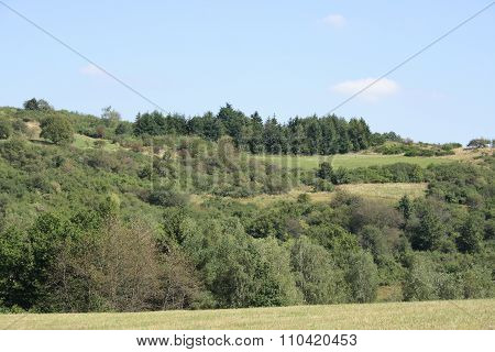 Forest And Meadows