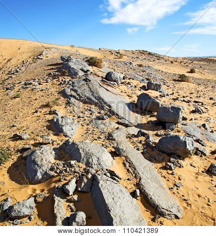 Bush Old Fossil In  The Desert Of Morocco Sahara And Rock  Stone Sky