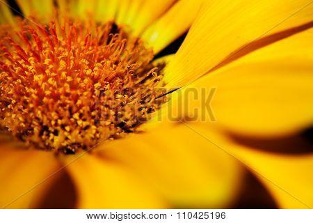 Flower photo macro style