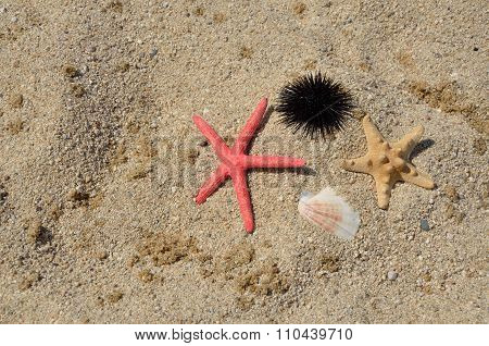 Sea Urchin And Sea Stars
