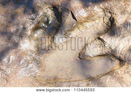 Detail of dinosaur tracks in Thailand