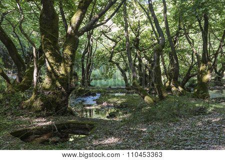 Stream in sycamore grove