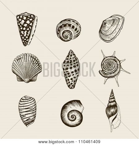 Set of vector vintage seashells.