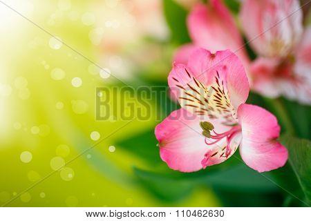 beautiful bouquet of flowers alstroemeria