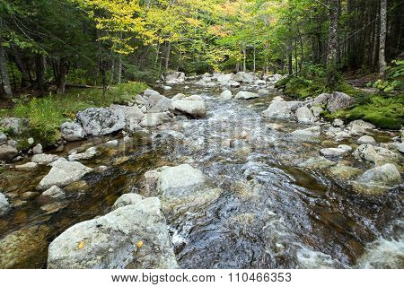 Autumn Forest And Water