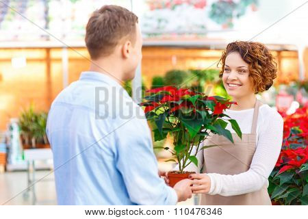 Florist giving blooming flower to her client.