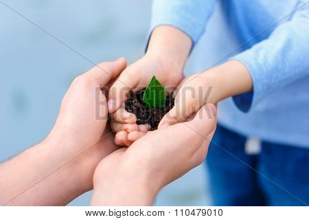 Small green plant in open hands.