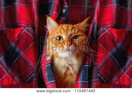 Ginger Cat Put It's Head In A Tartan Shirt. Funny Pet With Arrogant Emotion On Face.