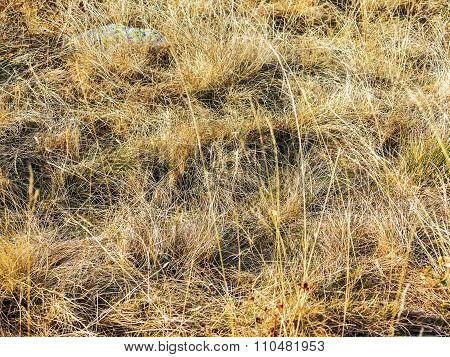 Natural Background For Autumn Design, Selective Focus. Parched Dry Grass Lawn As A Background For Al