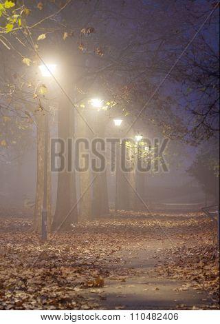 Foggy Autumn Night In A Park