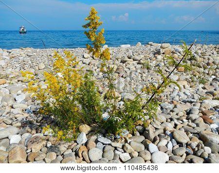 Flower Among Stones