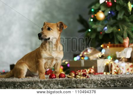 Small cute funny dog with Christmas gifts and accessories on dark background
