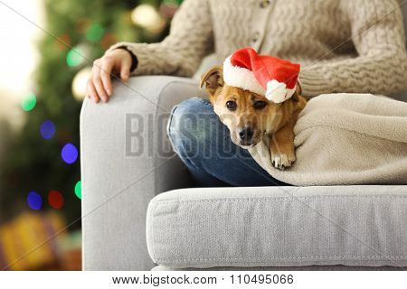 Female person holding small cute funny dog at chair on Christmas tree background