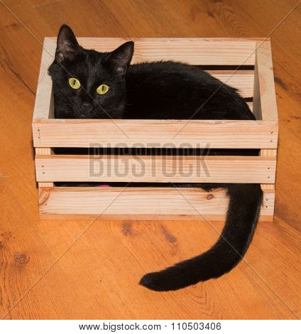 Black cat playing and hiding in a wooden crate, looking at the viewer