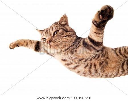 Nice flying funny kitten