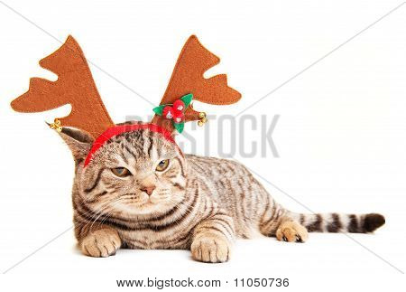 Funny kitten wearing deer horns