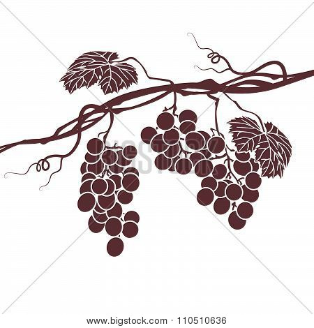 Monochrome Illustration Of The Vine On A White Background