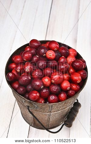 A bucket of fresh whole cranberries seen from a high angle. The pail is on a white wood table.