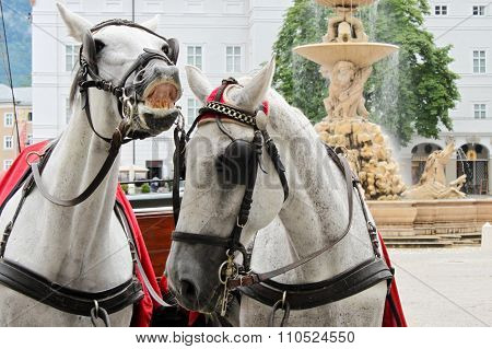 Horses In Salzburg