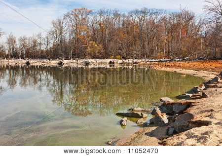 Dead Trees And Live Trees Surrounding Lake