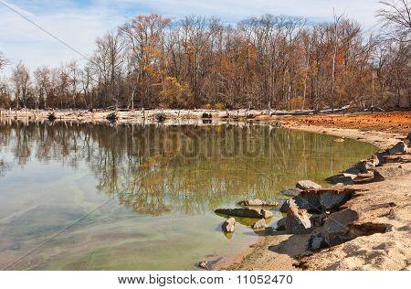 Árboles muertos y árboles que rodean el lago