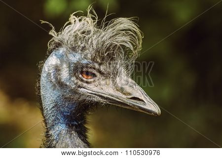 Portrait Of Emu