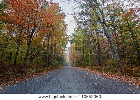 campsite road in Algonquin Provincial Park, Ontario, Canada