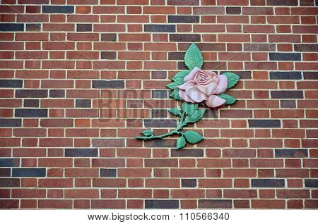Pink rose on brick wall