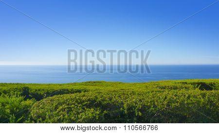 blue green horizon