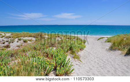 Beach Path with Coastal Flora: Indian Ocean