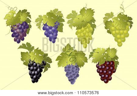 Vector set of bunches of grapes.