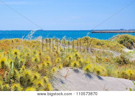 Coastal Dune Plants