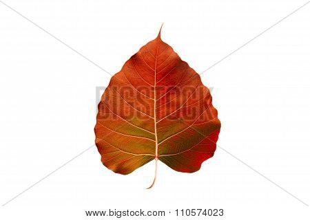 abstract colorful orange leaf, isolated on white background